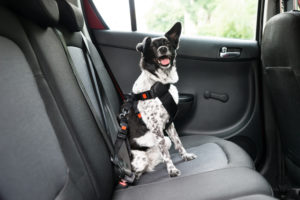 Hundegeruch im Auto